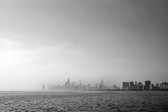 Faint (pantagrapher) Tags: city summer urban bw chicago skyline harbor haze nikon downtown seagull montrose d600