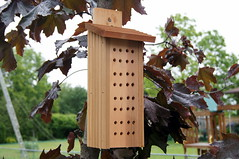 Bee House (haunted snowfort) Tags: garden bees nesting pollination beehouse pollinators masonbeehouse helpthebees markschoicebeehouse