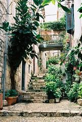Dubrovnik narrow passage-way (Song-to-the-Siren) Tags: leica 35mm croatia bluesky 35mmfilm analogue shrubs dubrovnik adriatic narrowstreet passageway leicaminilux kodakektar100
