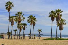 Venice Beach photo