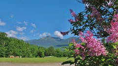 Blue skies b4 heading up (rightthewrong) Tags: new white mountains flower june washington bush mt adams great trails peak nh hampshire presidential glen mount observatory lilac madison summit range base obs mwo presidentials 2013