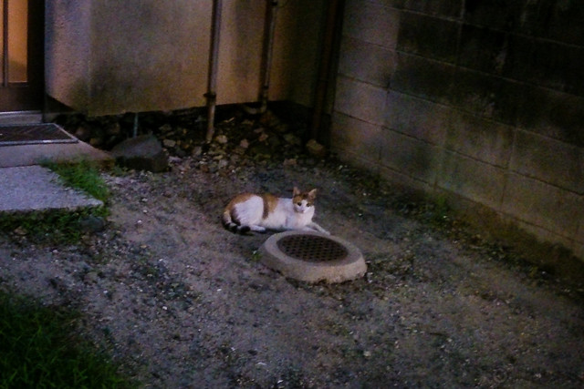 Today's Cat@2013-08-18