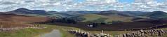 kilryhill (mygo360) Tags: panorama landscape scotland angus scottish panoramic highland angusglens cairngorms glens cairngormsnationalpark glenisla panoramascottish