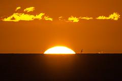 Aramoana Sunrise - thanks very much for 800 000 views (Ian@NZFlickr) Tags: ocean sea beach clouds sunrise pacific royal surfing nz otago dunedin albatross aramoana