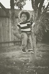 (Krista Cordova Photography) Tags: boy tree fall kids children brother cutekids hispanicchildren africanamericanchildren