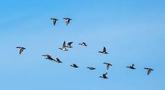 Birds Flying Formation