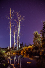 (C.Murray) Tags: longexposure trees light sky reflection water night canon dark stars dead still long exposure australia eerie pollution 5d canberra mkii 2470mm