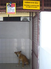 "Kennel • <a style=""font-size:0.8em;"" href=""http://www.flickr.com/photos/60200904@N02/11903232964/"" target=""_blank"">View on Flickr</a>"