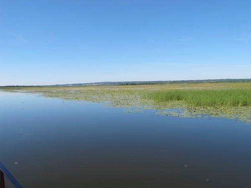 2010 07 08 Polonia - Warmia Masuria - Elblag - Il Canale - Jez Druzno - Lago Druzno - Area protetta_0911