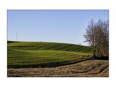 Campagna - #06/52 (Tumma_non_Ph) Tags: verde green landscape country hill hills campagna turin colline collina langhe campi torinese coltivati
