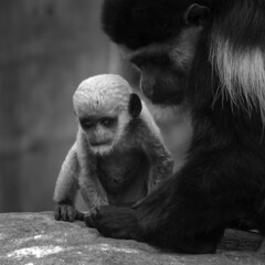 Cute??? (Gret B.) Tags: blackandwhite baby animal dark monkey dunkel tier affe schwarzweis affenbaby