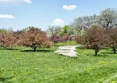 The Morton Arboretum (Ray Horwath) Tags: trees nature illinois nikon arboretum tamron chicagoland lisle mortonarboretum horwath tamronlens d700 rayhorwath 28mm300mmlens