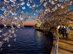 20140409-0161.jpg (rpcann) Tags: washingtondc cherryblossom tidalbasin