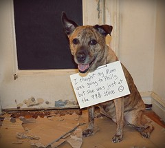 010 (odish3) Tags: dog tempertantrum pitbullmix tempertantrums