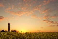 Yellow Sea II (parkerbernd) Tags: light sunset red sea sky lighthouse plant yellow backlight clouds germany lumix fantastic rape panasonic explore fehmarn leuchtturm rapeseed gx1 fluegge