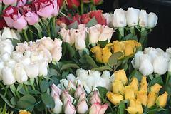 ROSAS QUE DEBIA HABERLAS VENDIDO AYER (CARLOS CALAMAR) Tags: rosas flores pomo ramos