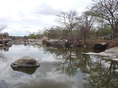 Ingá, PB. (Pedro Valadares) Tags: ingá paraíba brasil brazil semiárido árvore tree água water pedras rochas stones rocks gnaisse