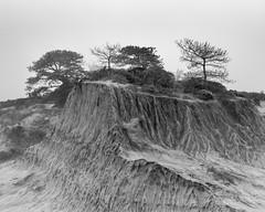 Broken Hill with Pines (jwsmithphoto) Tags: torreypines sandiego california brokenhill pacificcoast trees