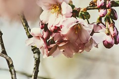 (winterprinzessin89) Tags: spring frühling outdoors nikon d3200 nature natur plant tree dslr photography photographie photo photografie fotografie