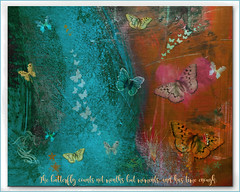 The butterfly counts not months but moments, and has time enough. (Rabindranath Tagore) (boeckli) Tags: texture rabindranathtagore poetography bunt colourful colorful color textures texturen butterflies butterfly schmetterlinge time netartii awardtree trolled
