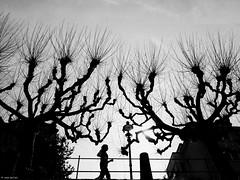 Today is a good day (René Mollet) Tags: spring frühling joy sport trees street streetphotography silhouette blackandwhite bw monchrom monochromphotographie streetphotographiebw streetart renémollet basel lowpov zuiko penf