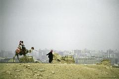 Giza (Svetlana Polukhina) Tags: giza cairo egypt camel مصر الجيزة جمل каир египет гиза верблюд