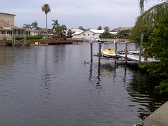 Yes, its common to see Dolphins in my @Gulf_Harbors because our Canals are that good ! (Steven Zimmerman) Tags: family homes beach swimming boat canal waterfront florida lifestyle tennis land agent condos tanning realtor sellers pasco buyers gulfharbors seaviewplace gulflandings