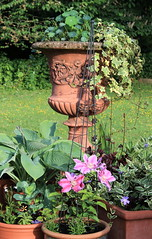 flowering clematis and urn (kilmarnockwillow) Tags: urn clematis pinkflower petunia hosta heuchera purpleflower containers nasturtium containergarden vinca terracottapot containergardening stoneurn purpleheuchera