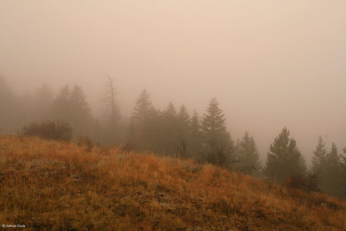 Photo - Autumn morning fog at a pine forest meadow ecotone.