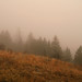 Autumn morning fog at a pine forest meadow ecotone.