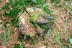 (k_n_u_f) Tags: forest mushrooms moss superia decay glove czechrepublic fujifilm konica fujisuperia200 superia200 konicaautos3 konicarangefinder revnicov konicarf