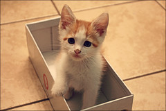 (K. Sawyer Photography) Tags: baby cute animal kitten box adorable foster
