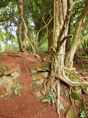 Roots and Rocks, Puzzlewood, Forest of Dean, Gloucestershire (photphobia) Tags: wood trees tree green rock forest starwars woods rocks stones secret roots gloucestershire hidden trail mysterious maze pathway coleford ramble rockformations forestofdean pathways enchanting puzzlewood paulmurray photphobia uniqueforest rootsandrocks enchantedpathways starwarsepisodevii downtotheroots possiblestarwarslocation