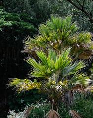 A few days in O'ahu - 4 (Bernard Languillier) Tags: usa hawaii oahu northshore d800