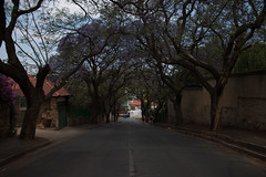 Jacaranda (Pascal Parent) Tags: southafrica review kensington johannesburg