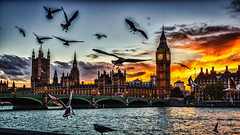 HC9Q7575_HDR-1 (rodwey2004) Tags: sunset seagulls london westminster thames skyline river dusk pigeons bigben westminsterbridge