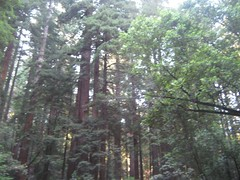 """Muir Woods • <a style=""""font-size:0.8em;"""" href=""""http://www.flickr.com/photos/109120354@N07/11042797285/"""" target=""""_blank"""">View on Flickr</a>"""
