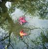 (khoosh) Tags: autumn trees nature water leaves reflections moments khashayar