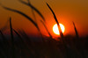 Hiding sun (dimitristsilis) Tags: sunset orange beautiful grass cool december bokeh magic dream silhouettes windy blades patras 2013 d7000 vpu1 vpu2 vpu3 vpu4 vpu5 vpu6 vpu7 vpu8 vpu9 vpu10