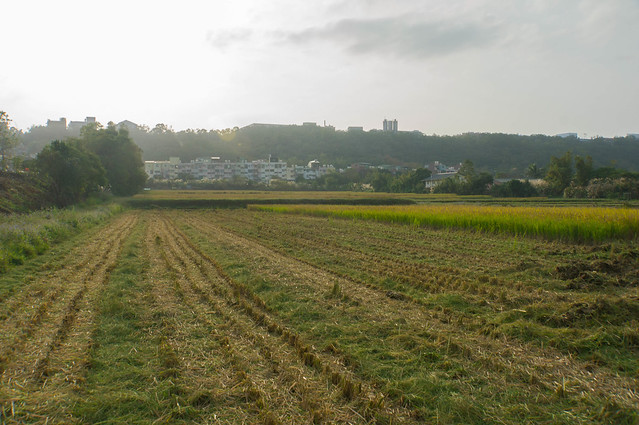 rice-06585.jpg