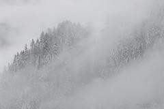 Misteriosamente bella.... (Ale*66*) Tags: trees italy white mountains fog alberi italia silence mysterious nebbia montagna bianco trentino silenzio misteriosa