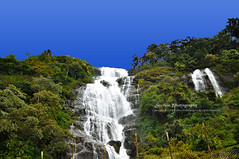 Periyakanal Water Falls at Munnar, Kerala, INDIA. (Sruthis Photography) Tags: india nature water beautiful nikon estate tea country kerala falls gods own thekkady enroute munnar kumily periyar d5000 periyakanal