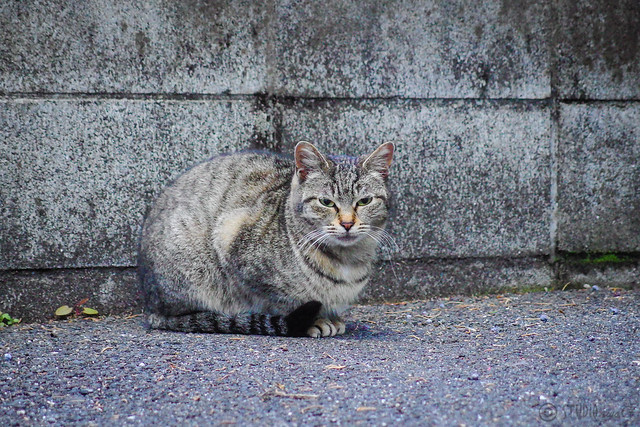 Today's Cat@2014-02-12