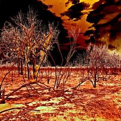 firescape (Fat Burns  (on/off)) Tags: art landscape fire bushfire ruralscene ruralscape sliderssunday