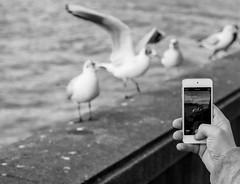 Bird Capture