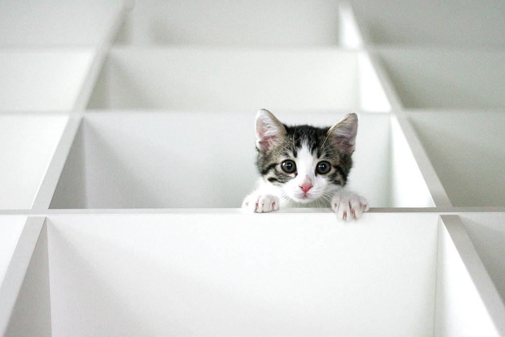 tags ikea cat bookcase gatto arturo libreria expedit
