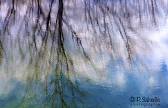 Monet (Pierre Salvaille) Tags: art reflexion impressionniste