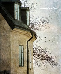 Looking Through the Attic Window (Milla's Place) Tags: windows roof building tree birds open textures attic textured millasplace distressedjewell