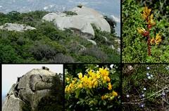 Parque Estadual Pico do Jabre  (15) (Egberto Arajo) Tags: de do pico estadual parque serra pico teixeira brasil brasileiras paraibano cidades paraba nordeste serto maturiapb jabre