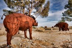 protecting the fam (rovingmagpie) Tags: california painted pigs tortoises sculptures slightly borregosprings wildpigs skyart galletameadows ricardobreceda galletameadowsestates valday2014 tortii